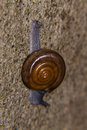 Macro Snail In The Nature