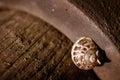 Macro snail of sleeping on oxidized surface Royalty Free Stock Photo