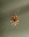 Macro Spider Stock Image