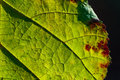 Macro view of green leaf Royalty Free Stock Image