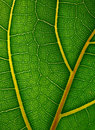 Macro view of green leaf Stock Image