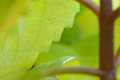 Macro view of leaf edge Royalty Free Stock Photo