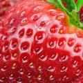 Macro view of strawberry fresh red ripe juicy Stock Photography