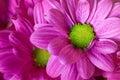 Macro Violet Flower And Petals...