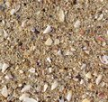 Macro of wet sea sand with shell fragments texture Royalty Free Stock Photo