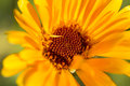 Macro of Yellow Flower Royalty Free Stock Photo