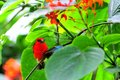 Madagascar red fody male bird & butterfly Royalty Free Stock Photo