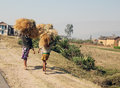 Madagascar women carrying stacks of hay october african farmers stack hays on their head to give to animals for feeding useful for Royalty Free Stock Image