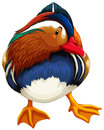 Madarin duck Royalty Free Stock Photo