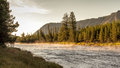 Madison river in yellowstone national park at sunrise Royalty Free Stock Image