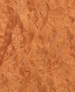 Madrone's root (wood texture) Stock Photos