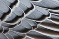 Magellan Goose feathers Royalty Free Stock Photo