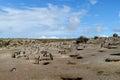 Magellan penguins colony near burrows Royalty Free Stock Photo