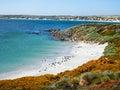 Magellanic penguin colony, Gypsy Cove Falklands Royalty Free Stock Photo