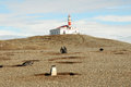 Magellanic penguins light house on the magdalena island magellan pengins Stock Photography