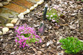 Magenta flowers with garden scoop in ground next to and small bypath japan Stock Photo