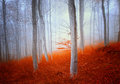 Magic autumn forest colorful beech Royalty Free Stock Photography