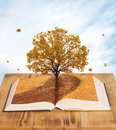 Magic book open of nature Stock Images