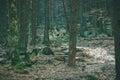 Magic dark forest.
