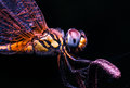 Magic Dragonfly