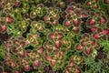Magic floral garden Royalty Free Stock Photo