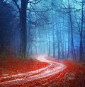 Magic forest road colorful autumn Stock Image