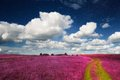 Magic Landscape - Pink Field and Sky with Real Sta Royalty Free Stock Photo