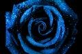 Magic Rose