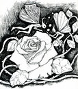 Magic rose and fairies a fantasy night scene of two growing up a huge flower with ink drawing Stock Image