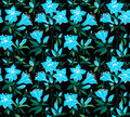 Magic seamless floral background with blue flowers on a black azaleas Stock Image