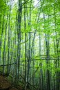 Magic spring forest Royalty Free Stock Photo