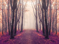Magic symmetry trail into fairy tale foggy forest Royalty Free Stock Photo