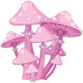 Magic Toadstools Royalty Free Stock Photo