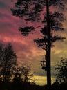 Magic tree Royalty Free Stock Photo
