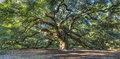 Magical Angel Oak tree, Charleston SC Royalty Free Stock Photo