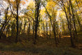 Magical autumn forest, Autumn colors, Autumn trees Royalty Free Stock Photo
