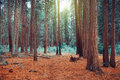 Magical dreamy forest background Royalty Free Stock Photo
