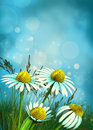 Magical flower background Royalty Free Stock Images