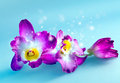 Magical flower orchid blossoming exotic for background postcards Royalty Free Stock Photos