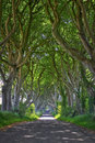 Magical forest of dark hedges woods with its strange shape trees northern ireland Stock Photos