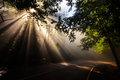 Magical forest with light rays Royalty Free Stock Photo