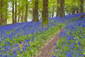 Magical forest and wild bluebell flowers green sunlit Stock Image
