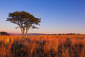 Magical sunset in africa with a lone tree on hill and thin cloud clouds Royalty Free Stock Images