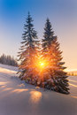 Magical winter landscape in mountains. View of snow-covered conifer trees and snowflakes at sunrise. Royalty Free Stock Photo