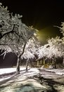 Magical winter park a fairy tale, mystery. Winter snow park alley night lights landscape. Snow at winter night park alley panorama Royalty Free Stock Photo