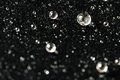 Magnificent luxury shiny water pearls on black velvet Royalty Free Stock Photo