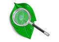Magnifying glass with green leaves and waterdrops Stock Images
