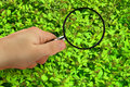 Magnifying glass and plant Royalty Free Stock Image