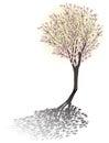 Magnolia blossom tree with shadow