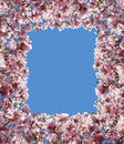 Magnolia flower border frame with pink petal blossoms from a spring tree with sprouting green leaves as a decorative design Royalty Free Stock Photography